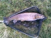 brown-trout-22in-dean-clough-nov08